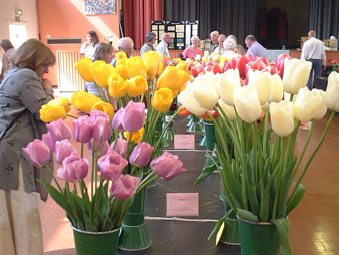 Wakefield And North Of England Tulip Society Dutch Tulips